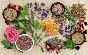 گیاهان دارویی - سایت خبری ازدیدما